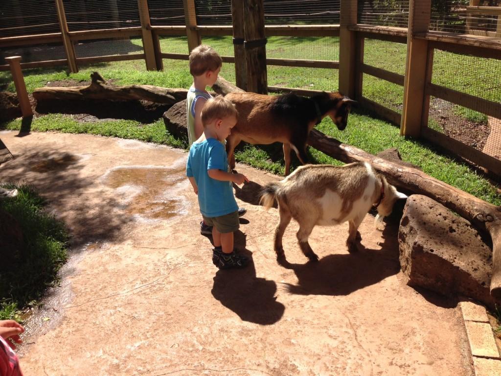 zoo petting