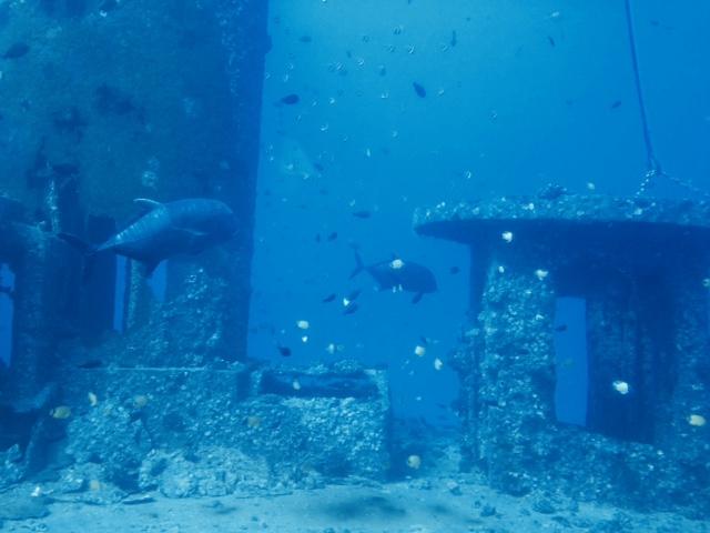 fish wreck